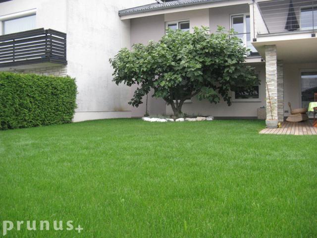 Setev trave