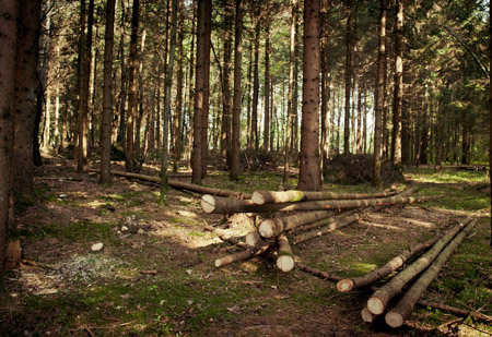 Gojitvena dela v gozdu