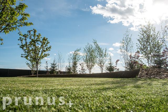 Načrtovanje in zasaditve vrtov